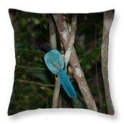 Birds From Coba Throw Pillow