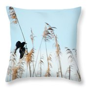 Black Bird In Cat Tails Throw Pillow