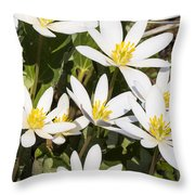 Bloodroot Flowers 2 Throw Pillow