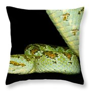 Blotched Palm Pitviper Throw Pillow