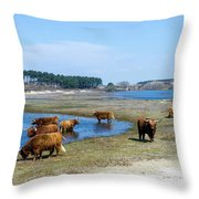 Cattle Scottish Highlanders, Zuid Kennemerland, Netherlands Throw Pillow