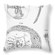 Chick Embryology, Malpighi, 1687 Throw Pillow