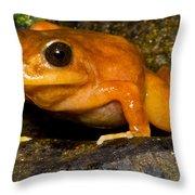 Chilean Tomato Frog Throw Pillow