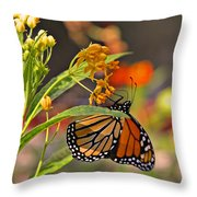 Clinging Butterfly Throw Pillow