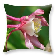 Columbine From The Songbird Series Named Robin Throw Pillow