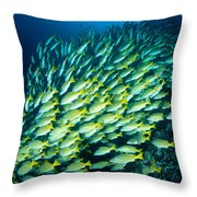 Coral Reef Scene Throw Pillow