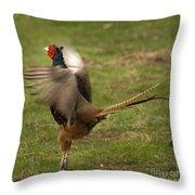Crowing Pheasant Throw Pillow