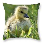 Cute Baby Goose Throw Pillow