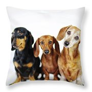 Dachshund Pack  Throw Pillow