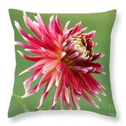 Dahlia Named Akita Throw Pillow