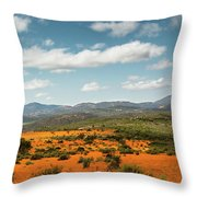Daisies Blooming In Namaqualand 2 Throw Pillow