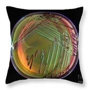 E. Coli In Culture Dish, Macro Image Throw Pillow