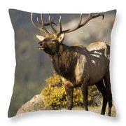 Early Morning Bull Elk Throw Pillow