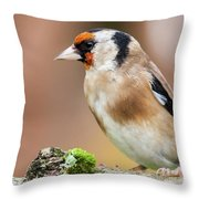European Goldfinch Bird Close Up   Throw Pillow