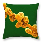 Eurotium Spores Throw Pillow