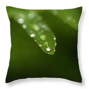 Fern Close-up Of Water Droplets  Throw Pillow