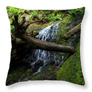 Fern Falls At Jedediah Redwoods State Park Throw Pillow