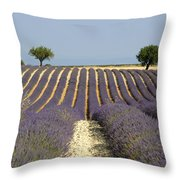 Field Of Lavender. Provence Throw Pillow
