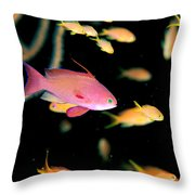 Fiji, Reef Scene Throw Pillow