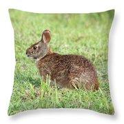 Florida Marsh Rabbit Throw Pillow