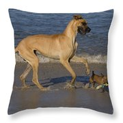 Giant And Tiny Dogs Throw Pillow