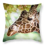 Giraffe Feeding On Green Leaves Of Lettuce Throw Pillow