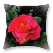 Gorgeous George Throw Pillow