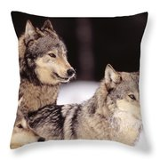 Gray Wolves Throw Pillow