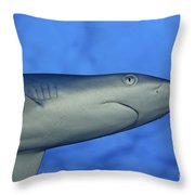 Grey Reef Shark Throw Pillow