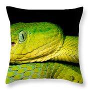 Guatemala Palm Pitviper Throw Pillow