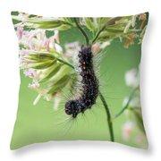 Gypsy Moth Caterpillar Throw Pillow