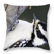Hairy Woodpecker Throw Pillow