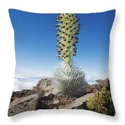 Haleakala Silversword Throw Pillow