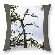 Hawk Owl Throw Pillow