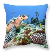 Hawksbill Turtle Feeding On Sponge Throw Pillow by Karen Doody