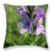 Hoary Vervain Throw Pillow