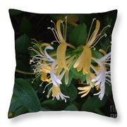 Honeysuckle Vine Throw Pillow