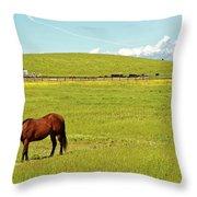 Horse Grazing Throw Pillow