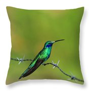 Hummingbird On Barbed Wire Throw Pillow