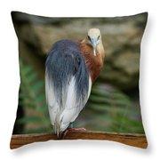 Javan Pond Heron At Zoo Berlin Throw Pillow