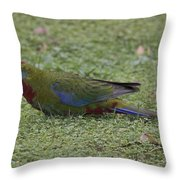 Juvenile Crimson Rosella Throw Pillow