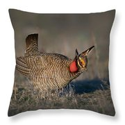 Lesser Prairie Chicken Throw Pillow