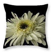 Leucanthemum Highland White Dream Throw Pillow
