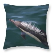 Long-beaked Common Dolphins In Monterey Bay 2015 Throw Pillow