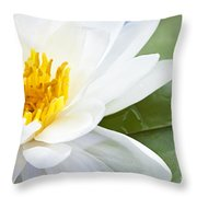 Lotus Flower Throw Pillow by Elena Elisseeva