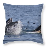 Lunge-feeding Humpback Whales Throw Pillow