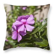 Madagascar Rosy Periwinkle Throw Pillow
