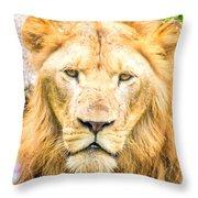 Majestic Lion Throw Pillow
