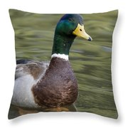 Mallard Drake Santa Cruz Monterey Bay Throw Pillow