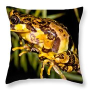 Marbled Wood Frog Throw Pillow